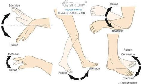 Flexion / Extension - Plantar flexion / Dorsiflexion