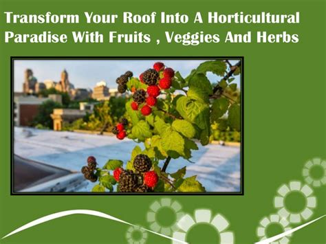 Roof Garden with ruits herbs and veggies